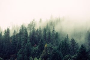 nature forest trees fog 300x200 - nature-forest-trees-fog